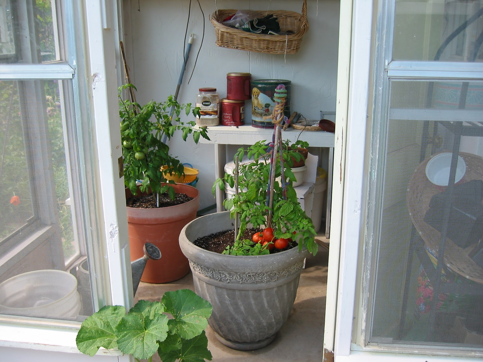 Growing tomatoes in containers welcome to todds seeds growing tomatoes in containers workwithnaturefo