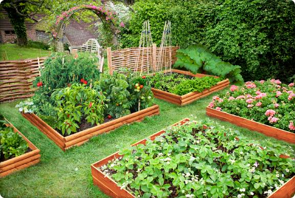 Helpful advice when starting an organic vegetable garden for Starting a vegetable garden