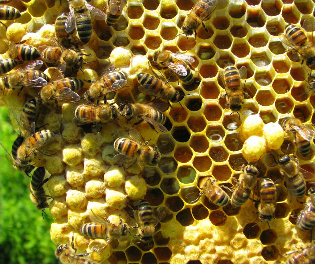 Image Result For Getting Rid Of Bees