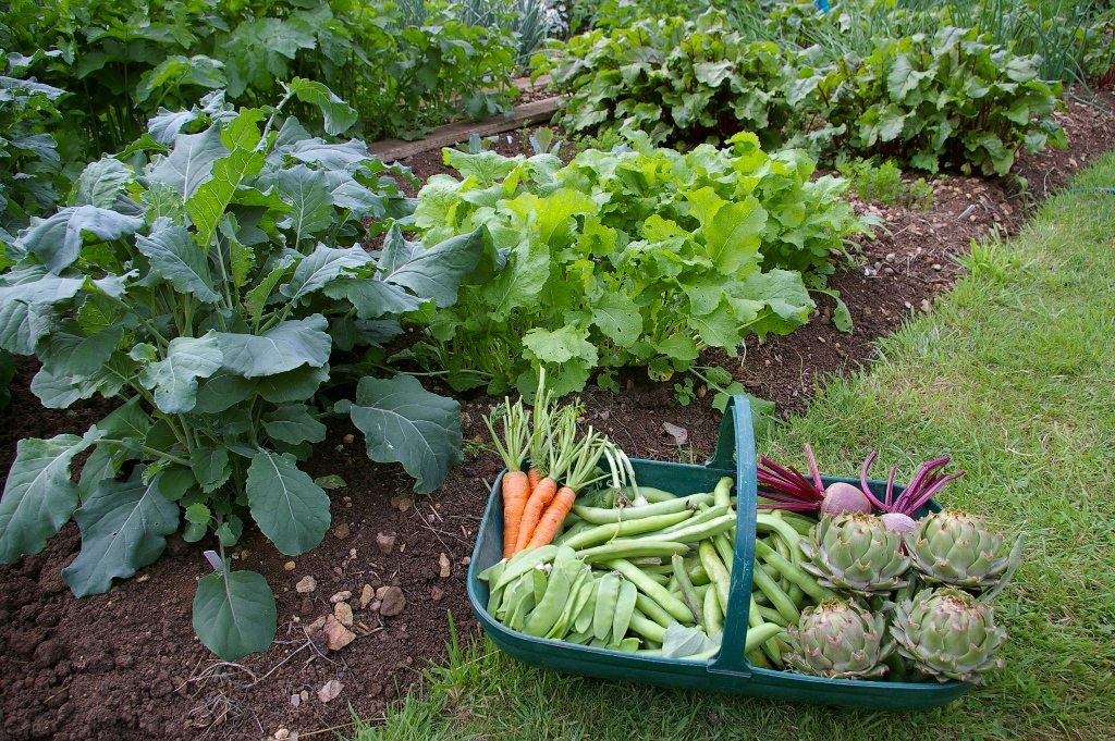top  reasons to start a vegetable garden  welcome to todd's seeds, Natural flower