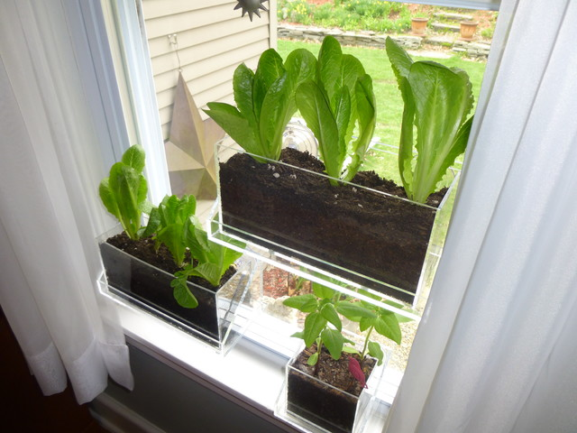 The Key To A Bountiful Indoor Garden | Welcome to Todd\'s Seeds