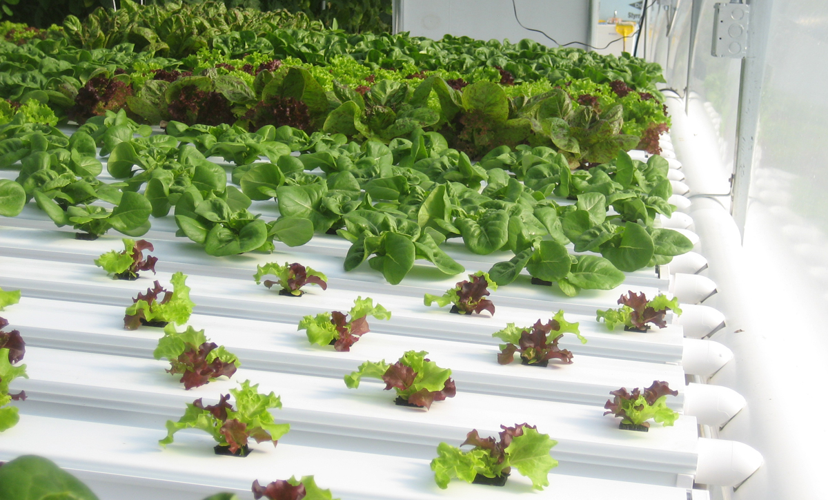 large hydroponic systems