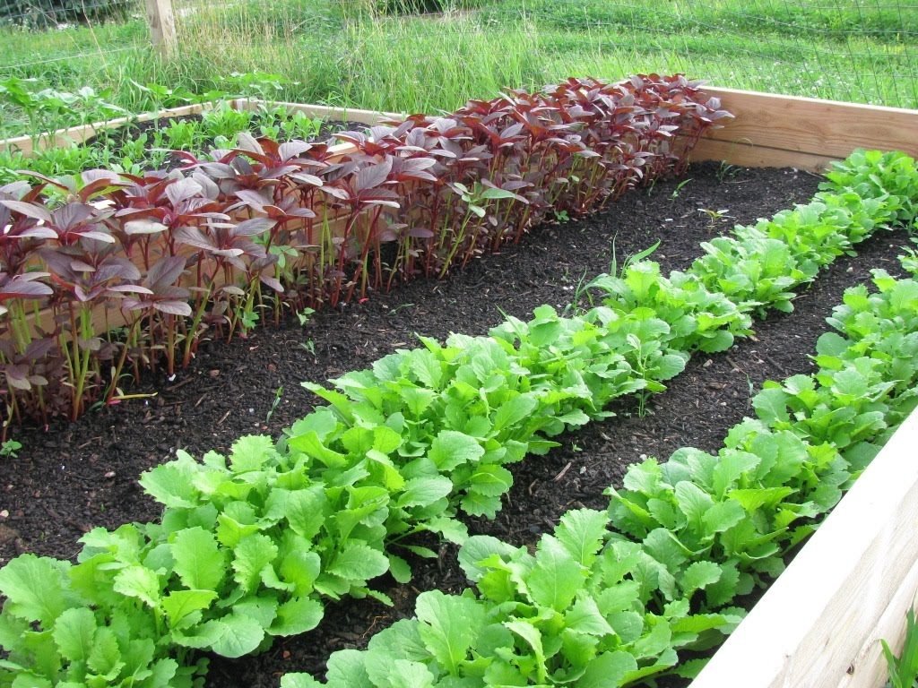 Best Vegetables and Methods To Use For Winter Gardening Welcome
