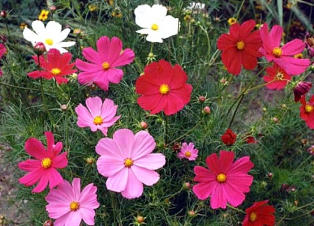 Choosing Seed Varieties For The Late Summer Flower Garden Welcome
