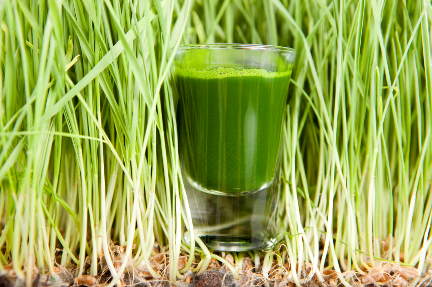 Wheatgrass juice welcome to todd s seeds